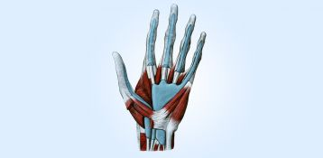 Bionic hands: touch, move, feel?