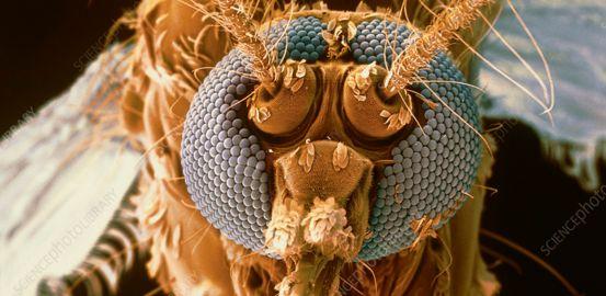 Faut il craindre une invasion des maladies tropicales?