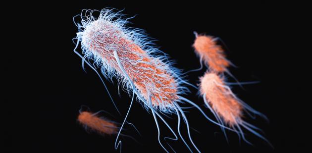 Super-bacteria are gaining ground - Décryptage - Mens Sana - InVivo