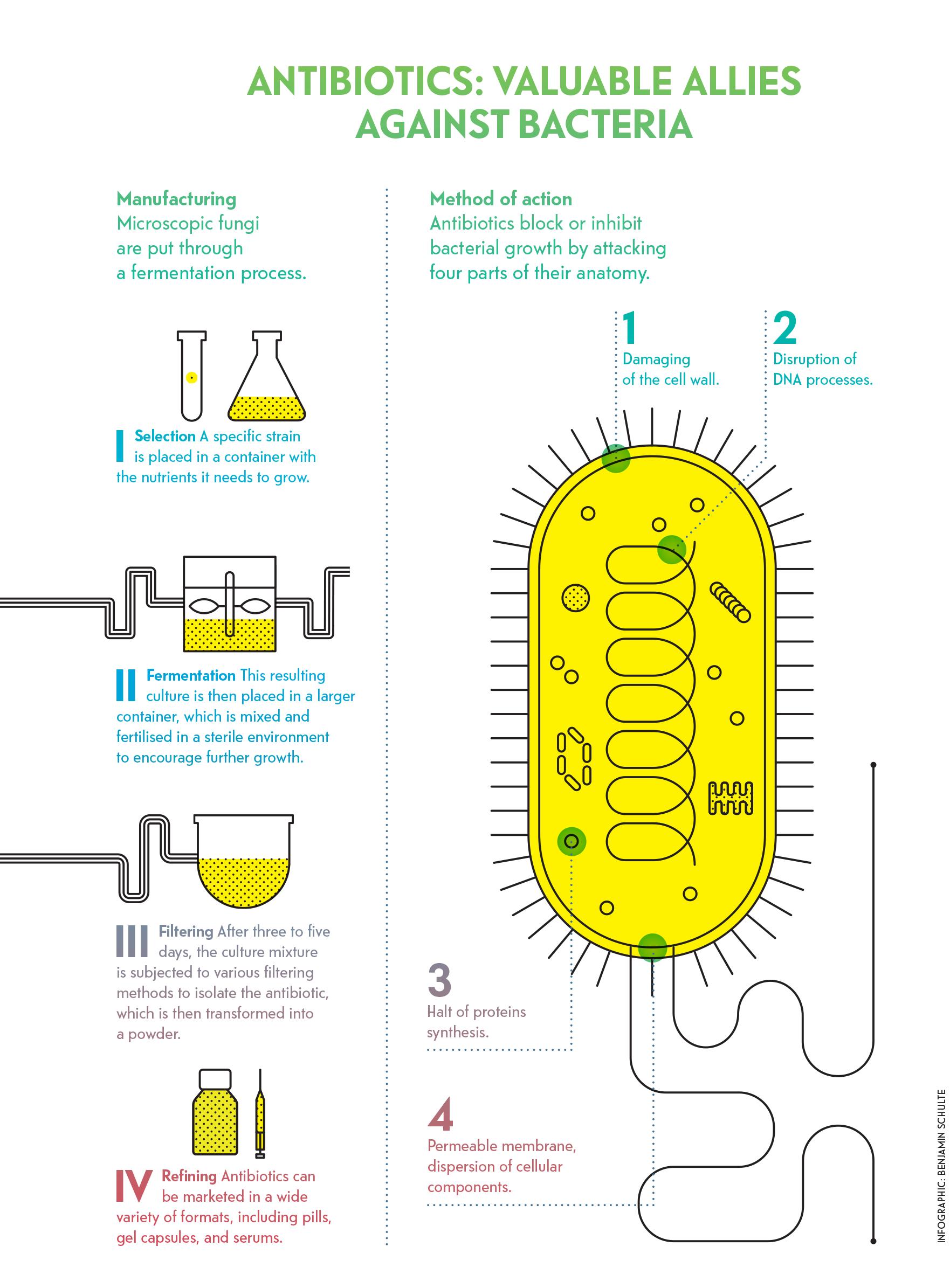 antibiotics: valuable allies against bacteria